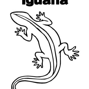Coloring Objects Iguana Coloring Pages
