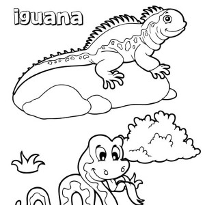 Simple Iguana Coloring Pages