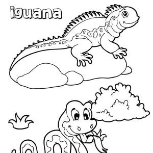 iguana sunbathing on a rock coloring page: iguana
