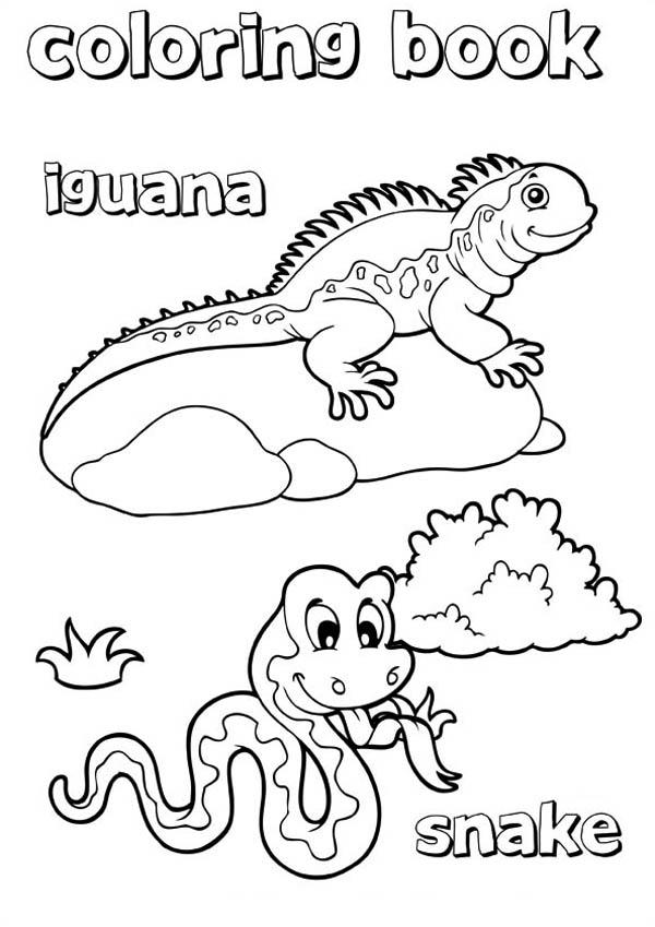iguana coloring book: iguana-coloring-book.jpg