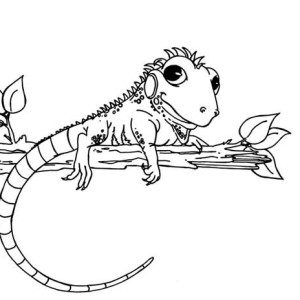iguana with pretty eyes coloring page