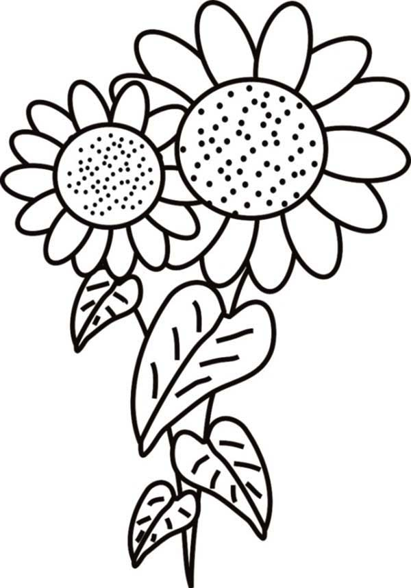 Fancy Star Drawing Coloring Pages