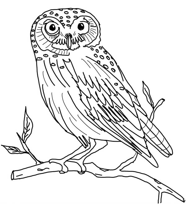 the little owl coloring page: the-little-owl-coloring-page