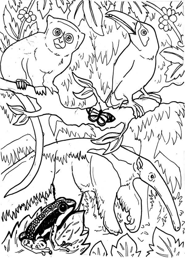Amazing Rainforest Animals Coloring Page: Amazing