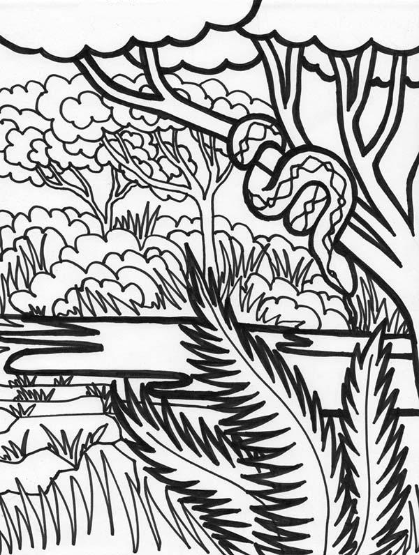 Boa Snake Rainforest Animal Coloring Page: Boa Snake ...