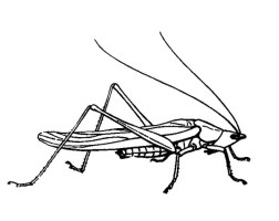 Grasshopper Drawing Coloring Page   Download & Print ...