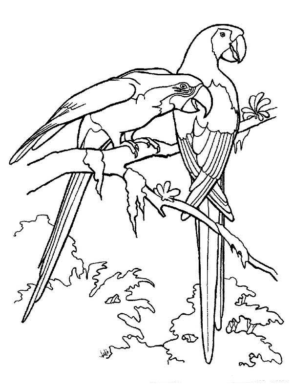 Tropical Rainforest Bird Coloring Pages