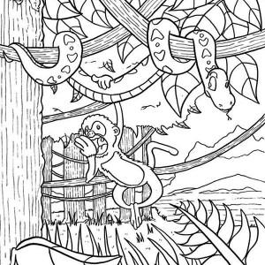 Amazon Rainforest Animals Coloring Pages
