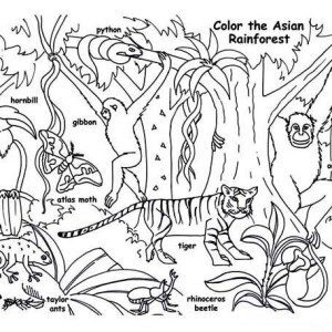 Amazon Rainforest Animals Coloring Page: Amazon Rainforest