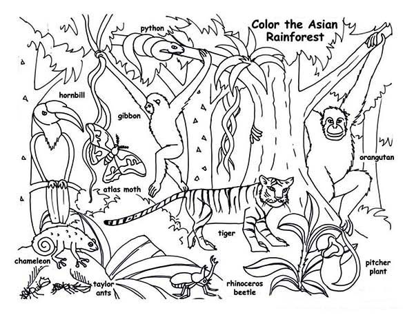 Rainforest Animals Coloring Page: Rainforest Animals