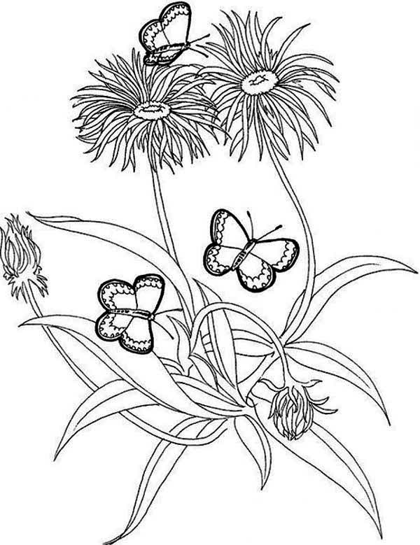 Jungle Flowers Pages Coloring Pages