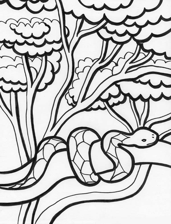 Rainforest Snake on Tree Coloring Page: Rainforest Snake