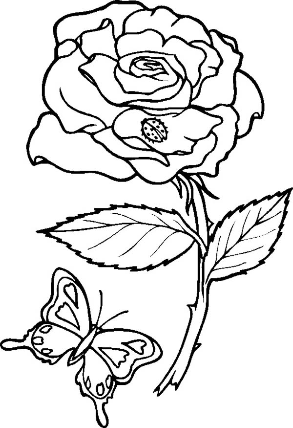 Rose And Butterfly Coloring Page Download Amp Print Online