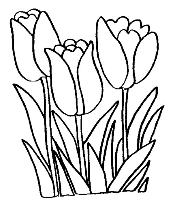 Tulip Flower Coloring Page: Tulip Flower Coloring Page