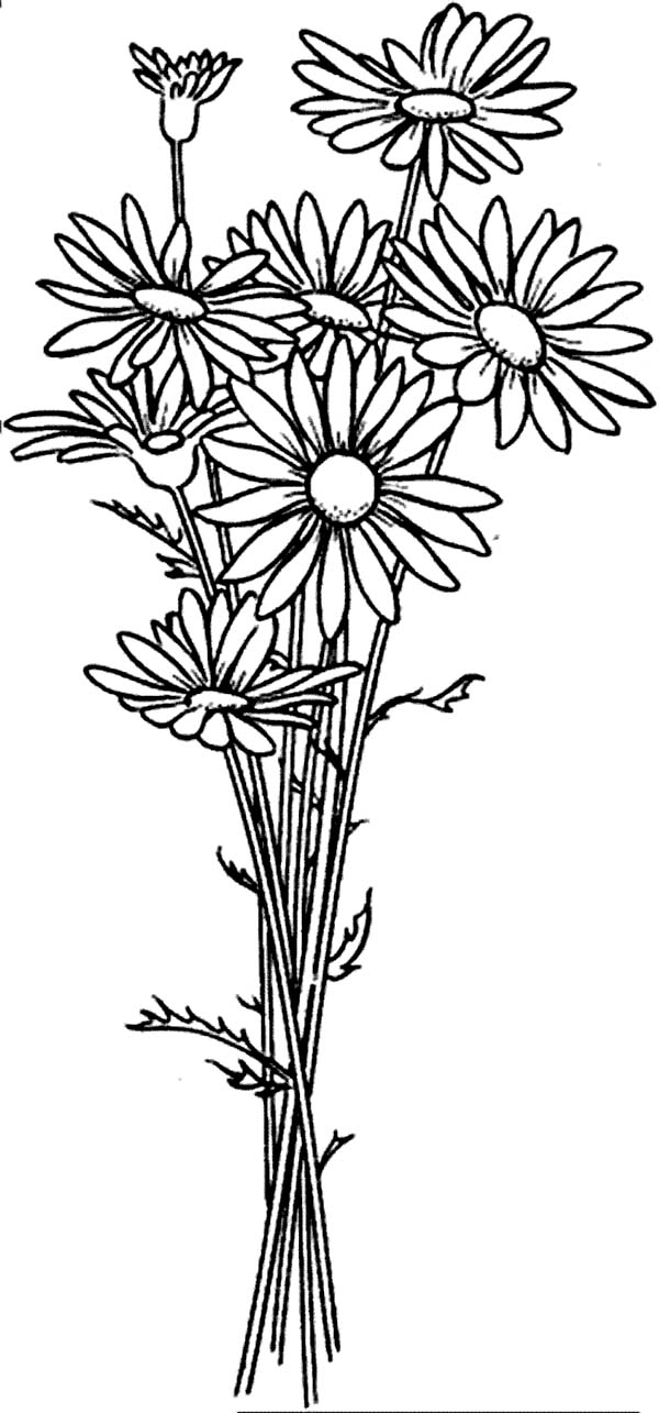 Daisy Flower Arrangement Coloring Page: Daisy Flower
