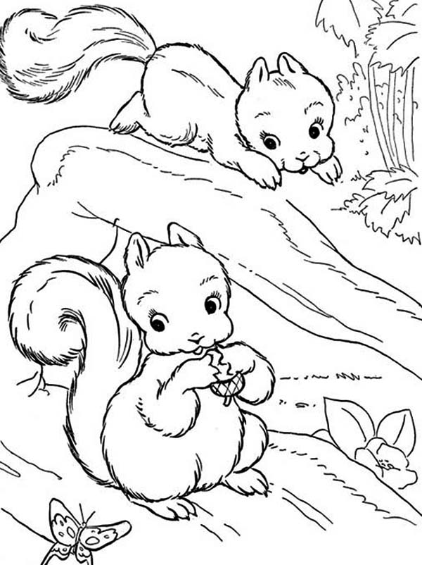 two baby squirrel coloring page  download & print online