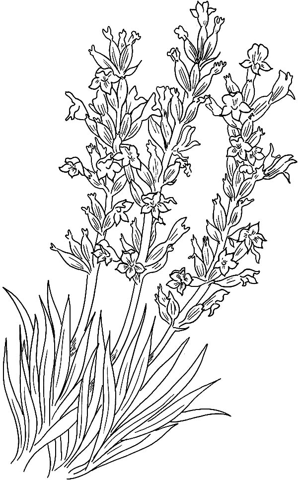 Download Online Coloring Pages for Free - Part 26