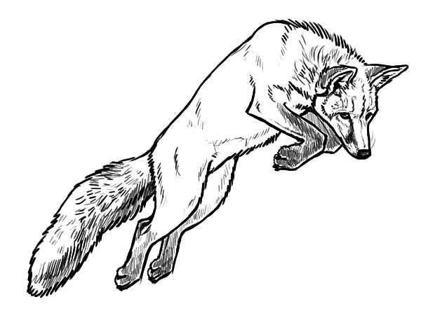 photograph regarding Printable Fox Coloring Pages called 20+ Sensible Fox Coloring Web pages Printable Tips and Plans