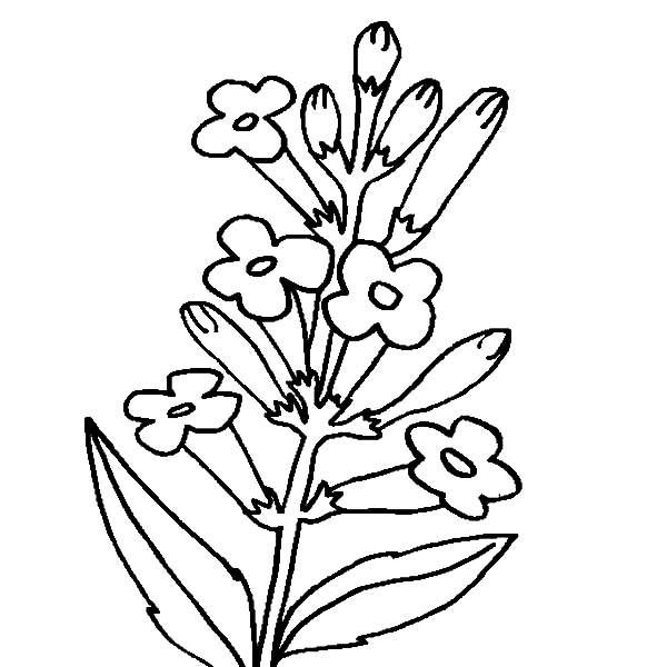 24 Harvest Coloring Pages Images