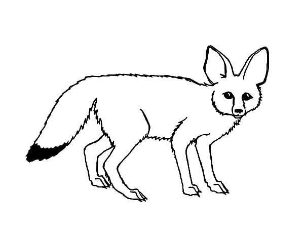 Free male fox coloring pages