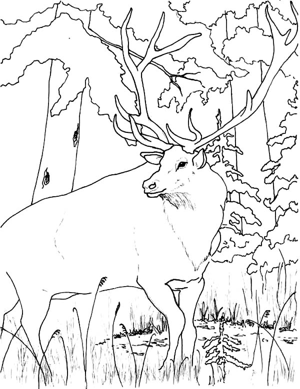 Flower Pot Coloring Page Empty Coloring Pages