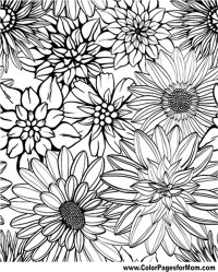 Advanced Coloring Pages - Flower Coloring Page 79