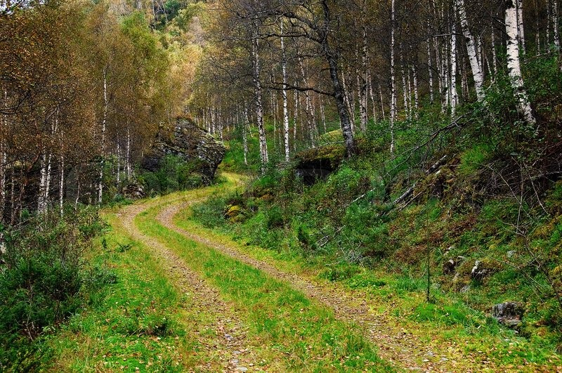 Fall Cabin The Woods Wallpaper A Winding Forest Road Through Autumn Stock Photo