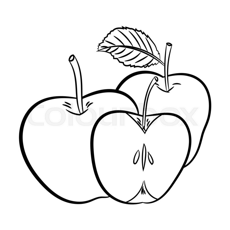 Hand drawn sketch of Apples isolated, Black and White