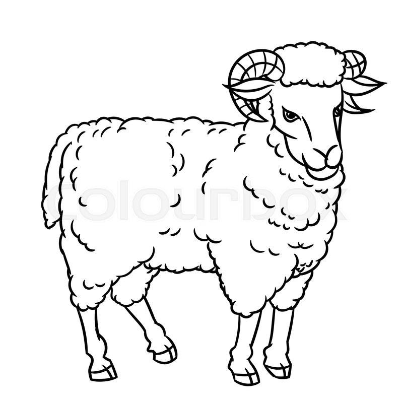 Hand drawing Sheep. farm animals set. Sketch graphic style