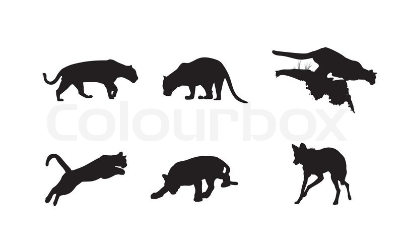 Black silhouettes of panther, lynx and hyena on the white
