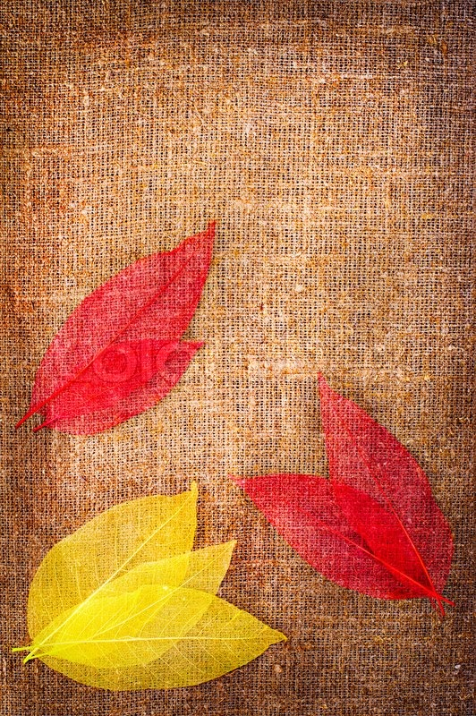 Fall Leaves Wallpaper Border Grunge Autumn Background With Dried Stock Photo
