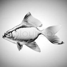 Fish With Scales And Fins List - Year of Clean Water