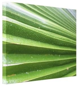 palm-front-zazzle-canvas