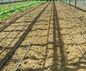 Come Fare Lorto La Preparazione Del Terreno Coltivazione