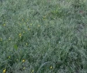 Terreno ricoperto da erbe infestanti