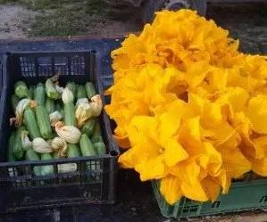 Fiorilli e zucchine appena raccolti