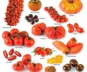 Varietà di pomodoro