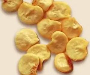 Coltivare peperoncini - dettaglio semi di peperoncino