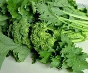 Semina e coltivazione delle cime di rapa - primo piano broccoletti