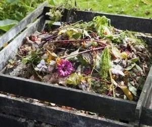 Compost domestico