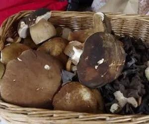 funghi porcini-cestino-per-la-raccolta