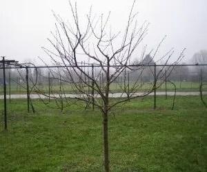 potatura-stato-della-pianta-potatura-secca