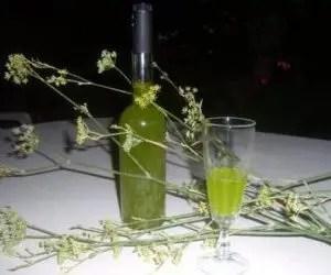 Il finocchio selvatico e la ricetta del liquore al finocchietto - liquore al finocchietto
