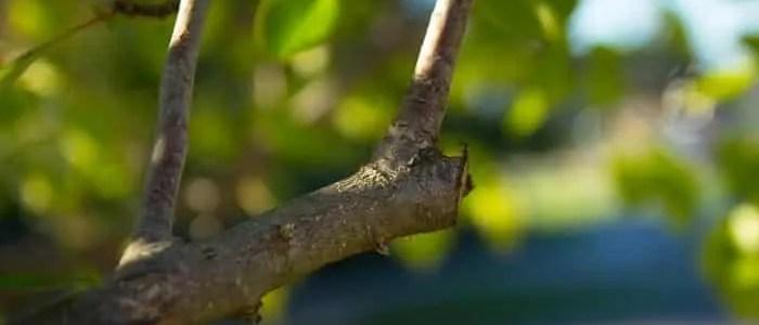 Consigli e tecniche di base per la corretta potatura di viti, rose e alberi