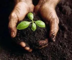 concimazione naturale-sovescio di leguminose-terra