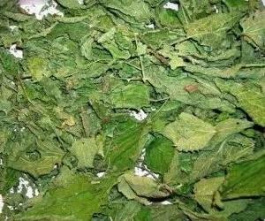 dried nettle
