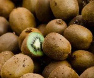 I frutti raccolti della coltivazione del kiwi