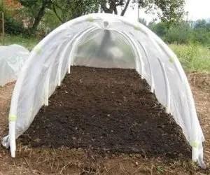 Come proteggere le piante dal gelo col tunnel freddo
