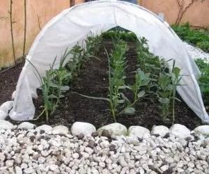 Come proteggere le piante dal gelo con una piccola serra