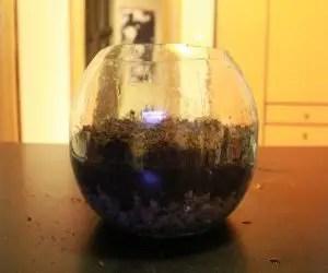 Composizione piante grasse in vetro piano di terriccio